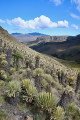 Landscapes of the Paramo