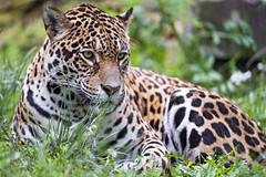 Zoya in the grass