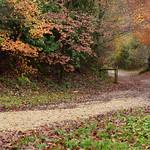 Autumn at Sandy Balls by Nina Harrup