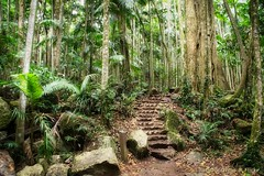 Rainforest walk (Tamborine mountains)