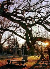 "Cincinnati - Spring Grove Cemetery & Arboretum ""Morning Rest Under Oak Tree"""