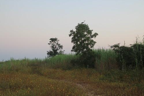Fall Sunrise at Village Point Park Preserve
