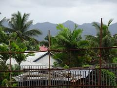 Scaffolded Palms