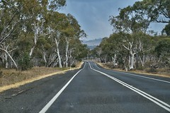 Drive along the eucalypts on New England Highway