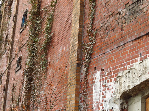 wall n plants