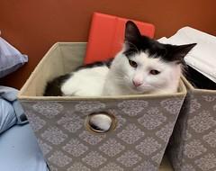 Trust a cat to find a box.