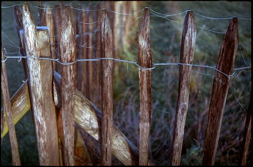 Givre sur une clôture
