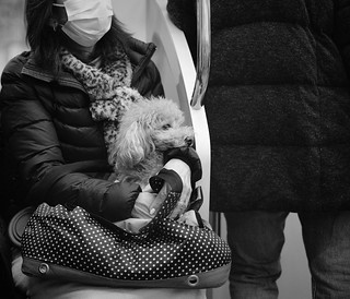 Dog on the train 1