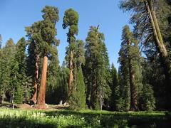 langs Big Trees trail