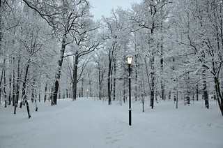 Epiphany. Palace Park in the snow.