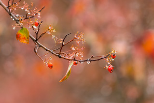 Fall color (X9B_0487-1)