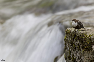 En el torrente