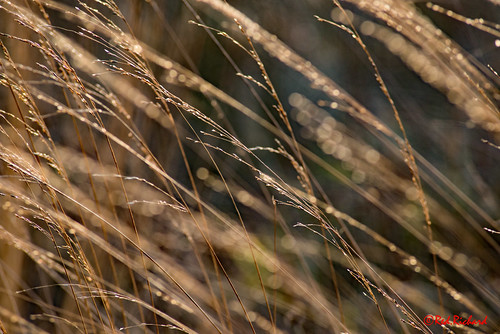 Grasses (2362)