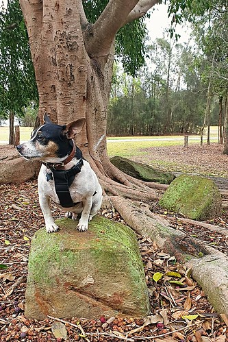 Shanti enjoying his Walkabout in nature