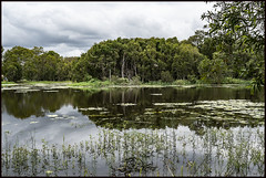 Nudgee wetlands is filled after rain=
