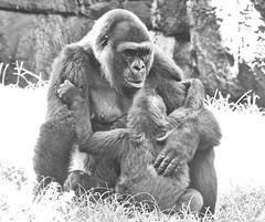 A hug for baby