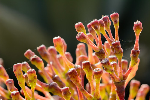 Botanic Gardens Macro-1