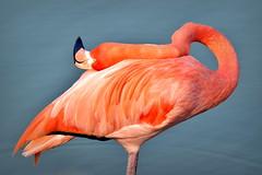 The Conference of Birds منطق الطیر