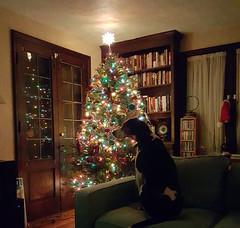 Ellie Mae at Christmas 2019