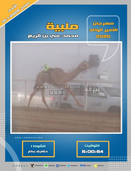 صور سباق الحقايق (الأشواط العامة) مهرجان الأمير الوالد صباح 19-1-2020