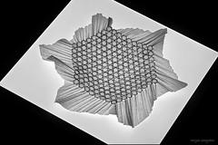 Origami Tessellations 2020