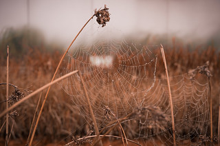 A spider´s web