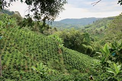 Around the Colombian coffee