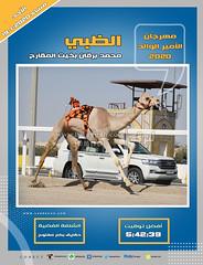 صور سباق الحقايق (الأشواط العامة) مهرجان الأمير الوالد مساء 19-1-2020