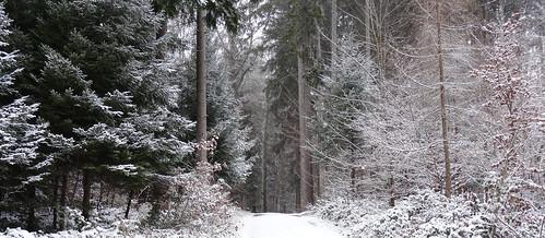 721 müM - 1 cm Schnee
