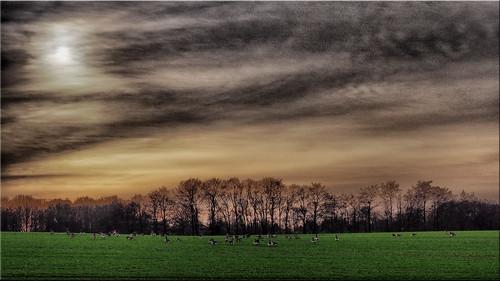 A winter day in Holstein