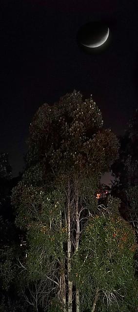 IMG_20200114_214644+52+crescent moon_全景1