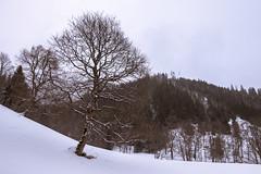 Teichen, Kalwang