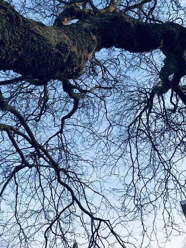 Looking at the January Sky.