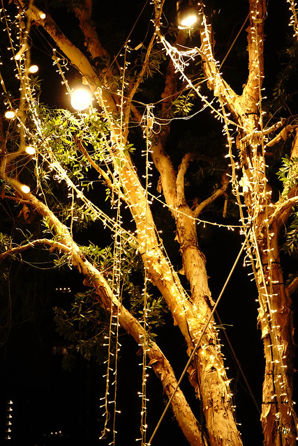 Light Hangs from a Tree