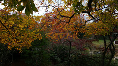 Fall Foliage at Old Westbury Gardens