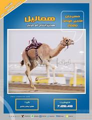صور سباق اللقايا (الأشواط المفتوحة) مهرجان الأمير الوالد صباح 20- 1-2020
