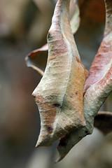 Sun stressed leaves