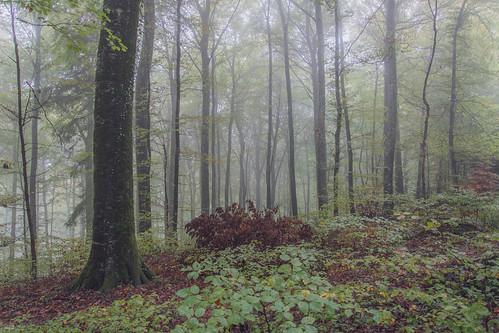 Forêt de Jolimont, Gals