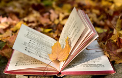 Book Autumn Leaf Leaves Old Edited 2020