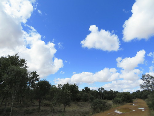 20190922 17 498 Frances Wolken Bäume Weg RegenPfütze