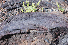 Pahoehoe basalt lava (North Crater Flow, Holocene, 2.2-2.4 ka; Craters of the Moon Lava Field, Idaho, USA) 18