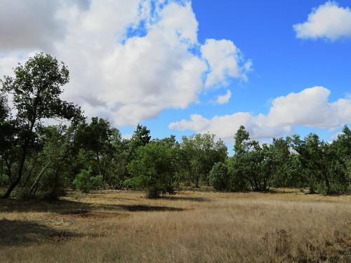 20190922 17 493 Frances Wolken Bäume Wiese