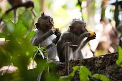 Little monkeys looking