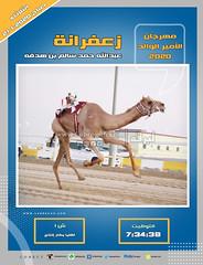 صور سباق اللقايا (الأشواط العامة) مهرجان الأمير الوالد صباح  21-1-2020