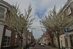 Bomen bij de ingang van een straat in Den Haag (136FJAKA_3303)