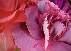 Supermarket Flowers, In Color
