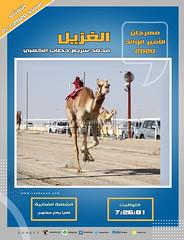 صور سباق اللقايا (الأشواط العامة) مهرجان الأمير الوالد مساء  21-1-2020