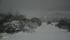Olvega bajo la nieve.