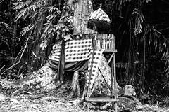 A holy tree. Bali, Indonesia.