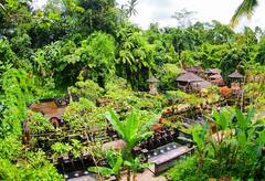 A sacred Balinese temple among lush greenery
